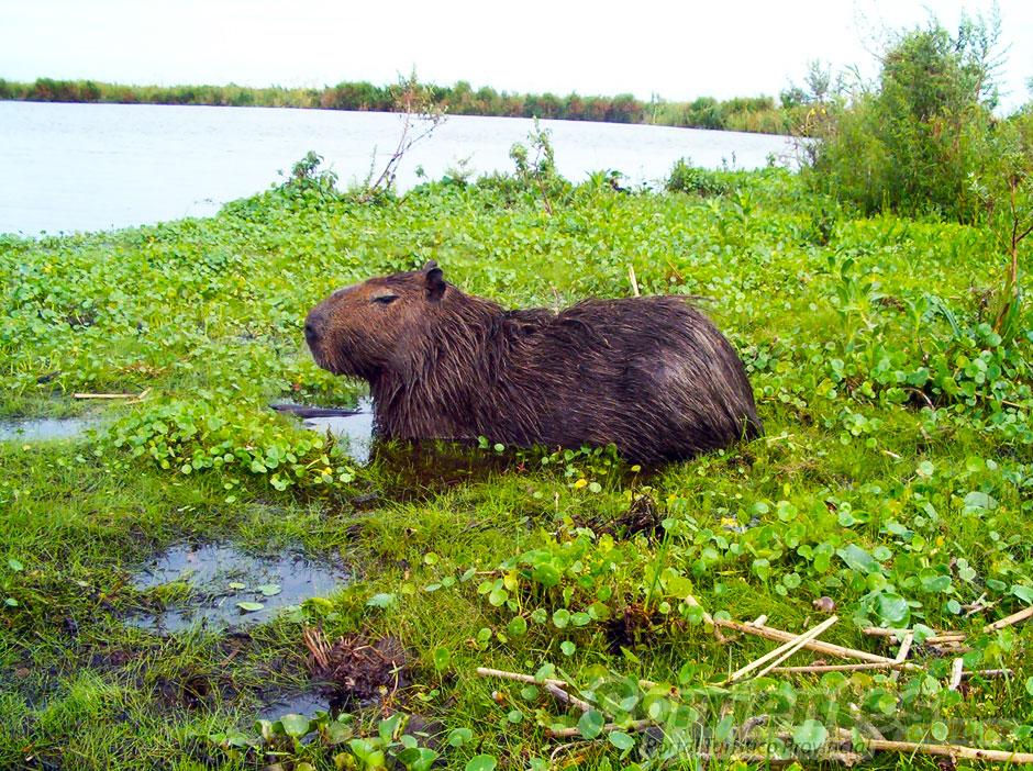 Flora Y Fauna En Los Esteros Del Ibera En Corrientes Turismo